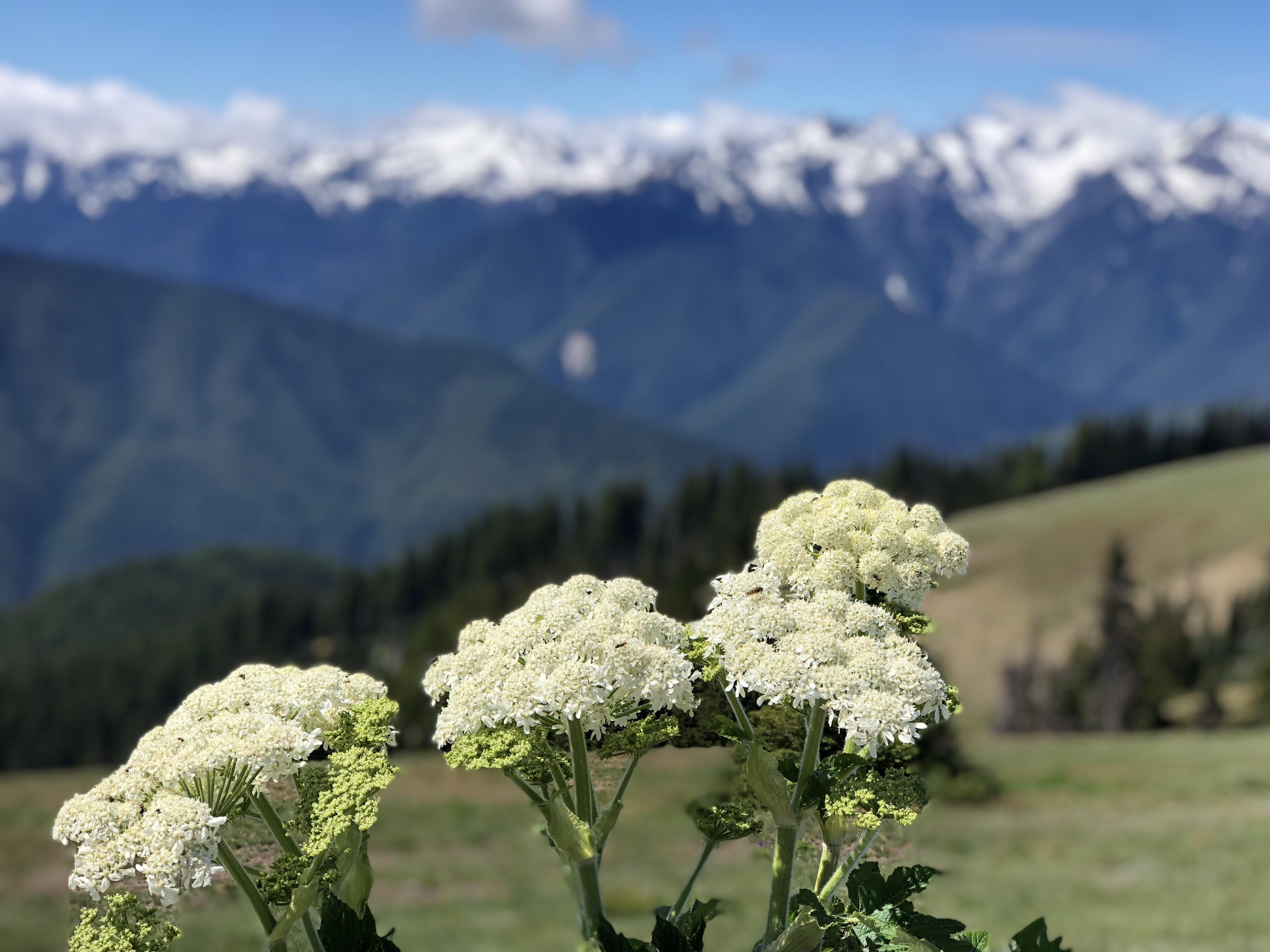 Hurricnae-ridge